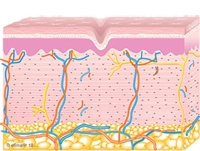 Graphic of Collagen Remodeling